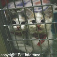 We kittens can be spayed at 8-12 weeks. Then we will be ready to find homes!