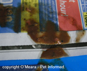 Haemorrhagic, watery diarrhea typical of canine parvovirus infection. The presence of blood in diarrhoea is not diagnostic of parvo virus though: a parvovirus test must be performed.