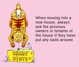 When moving into a new house, always ask the previous owners or tenants if they have put any rat baits or snail baits out. Most people are happy to tell you where they are.