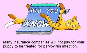 Many pet insurance companies do not provide cover against canine parvovirus.
