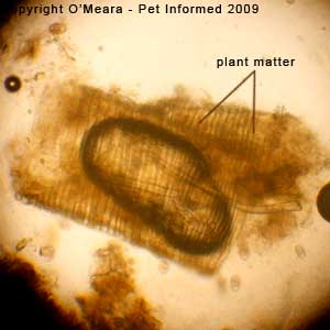 Fecal float parasite pictures - plant material.