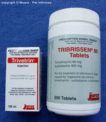 Trimethoprim sulfonamide (sulfa) drugs are the drugs of choice in coccidiosis.