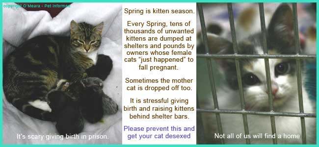 The sad reality of irresponsibly allowing cats to become pregnant.