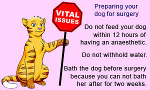 Some basic steps on preparing and fasting your dog for dog spaying surgery.