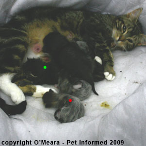The foster kitten's head (red dot) is much smaller than the original kitten's head (green dot).