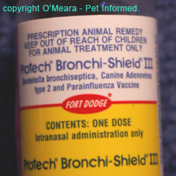 An example of an intranasal vaccine product that protects against Bordetella, parainfluenza and adenovirus (kennel cough)