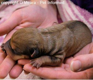 A newborn puppy.